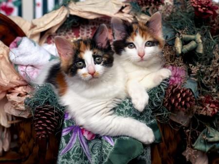 أجمل قطط في العالم (6)
