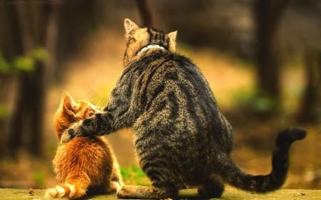 أجمل قطط (3)