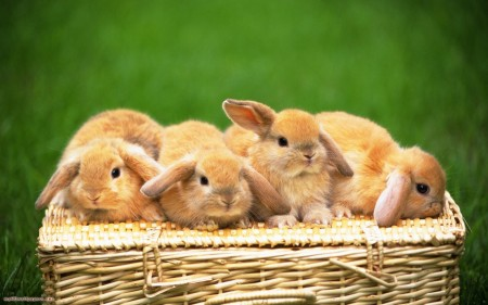 أحلي صور أرانب (2)