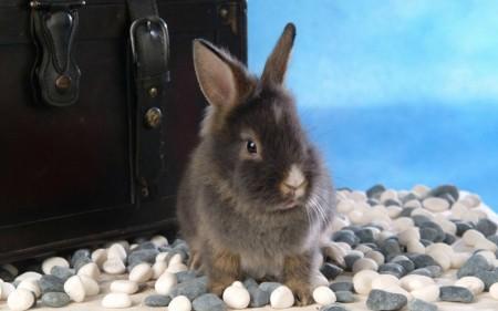 أحلي صور أرانب (3)