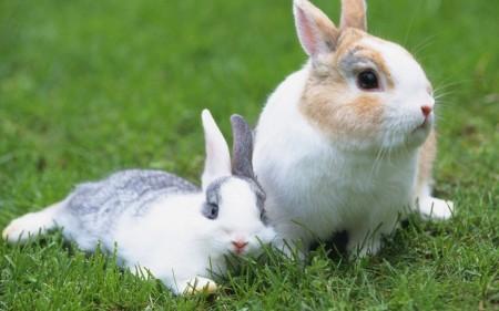 أحلي صور أرانب (4)