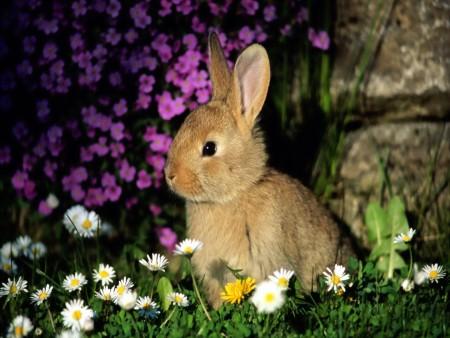 صور أرانب 6