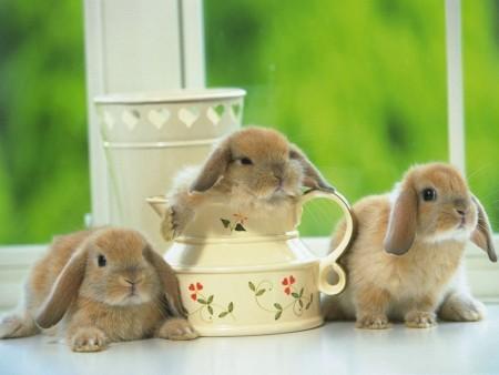 أحلي صور أرانب (7)