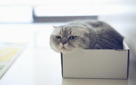اجدد صور قطط وأجمل القطط بالعالم (1)
