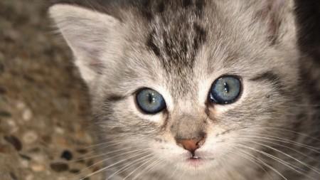 اجدد صور قطط وأجمل القطط بالعالم (4)