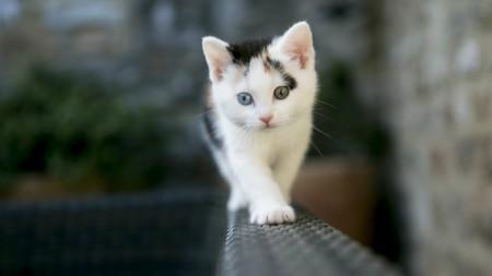 اجدد صور قطط وأجمل القطط بالعالم (5)