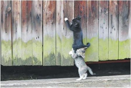 اجدد صور قطط وأجمل القطط بالعالم (6)