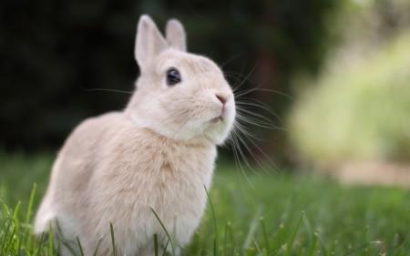 اجمل ارانب (4)