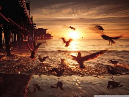 اجمل خلفيات الطيور (2)