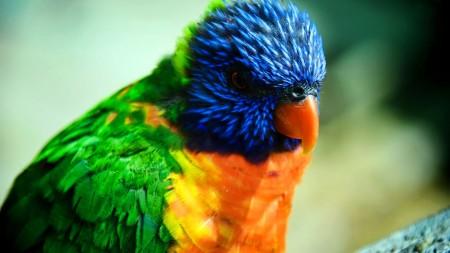 اجمل طيور العالم (3)