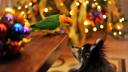 اجمل طيور العالم (4)