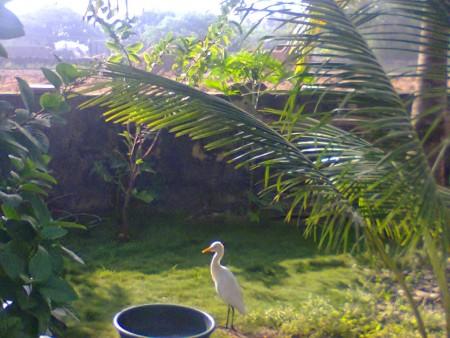 اجمل طيور العالم (5)