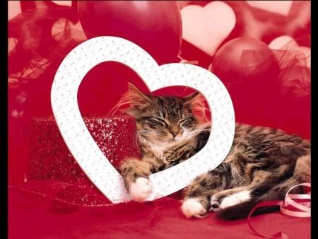 اجمل قطط (2)