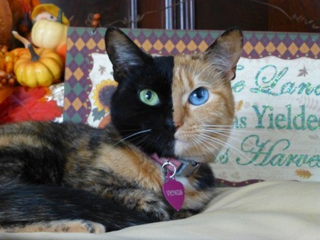 اجمل قطط (3)