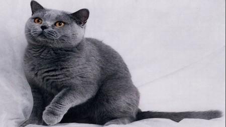 احلى صور قطط (5)