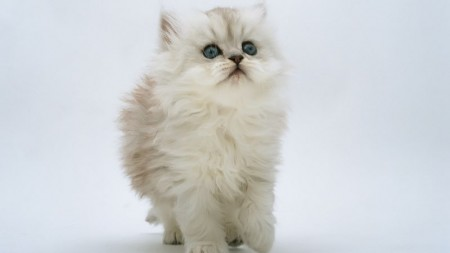 احلى صور قطط (6)