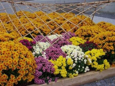 احلي زهور وورد في العالم (2)
