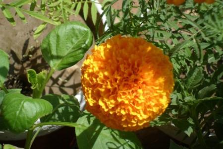 احلي زهور وورد في العالم (4)
