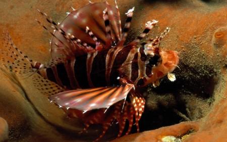 احلي سمك زينة  (4)