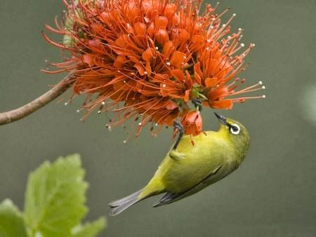 احلي صور طيور (6)