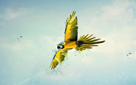 احلي طيور (6)