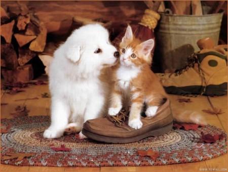احلي قطط (1)