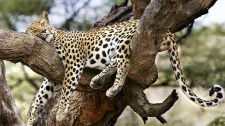 احلي واجمل حيوانات الغابة (3)