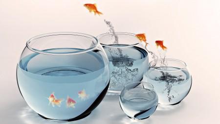 احواض اسماك الزينة (8)