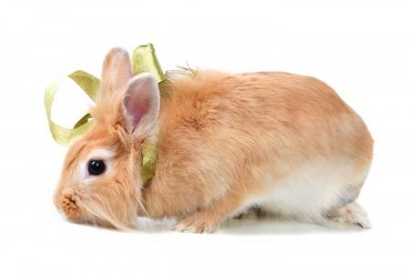 ارانب بالصور (1)