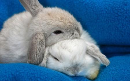 ارانب بخلفيات جميلة (1)