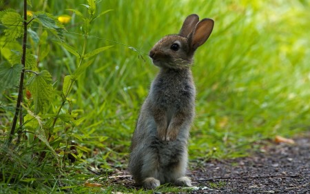 ارانب بخلفيات جميلة (3)