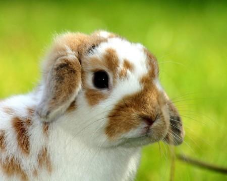 ارانب جميلة بالصور (2)