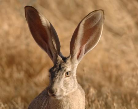 ارانب جميلة بالصور (4)