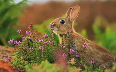 ارانب جميلة بالصور (5)