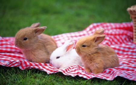 ارانب جميلة جدا (1)