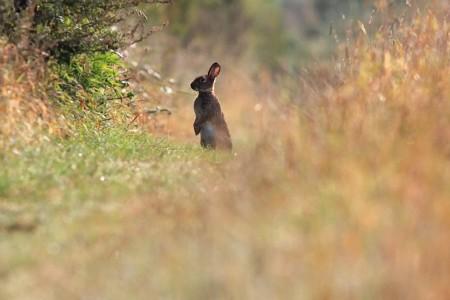 ارانب جميلة جدا (3)