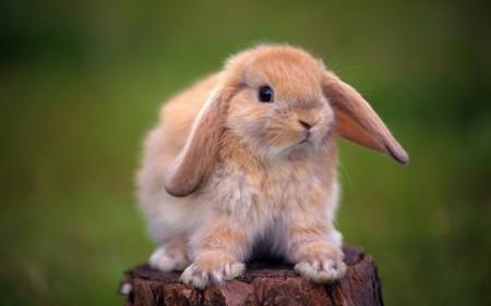 ارانب جميلة جدا (5)