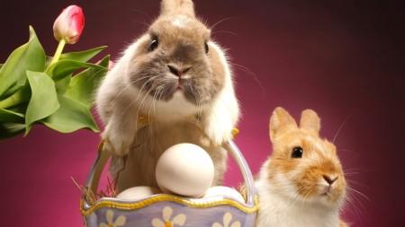 ارانب جميلة (1)