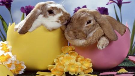 ارانب جميلة (2)