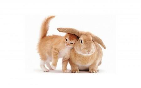 ارانب جميلة (4)