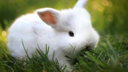 ارانب روعة (2)