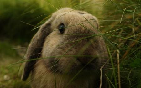 ارانب سلالات (5)