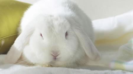 ارانب صغيرة (2)
