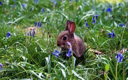 ارانب ملونة روعة (1)