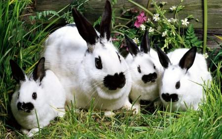 ارانب ملونة روعة (2)