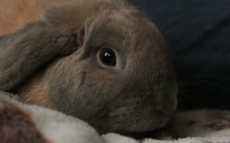 ارانب (2)