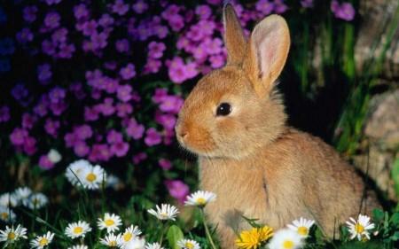 ارانب (4)