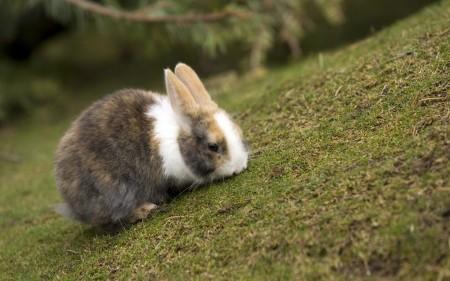 ارنب بالصور (3)