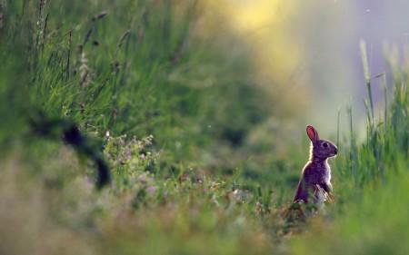 ارنب (3)