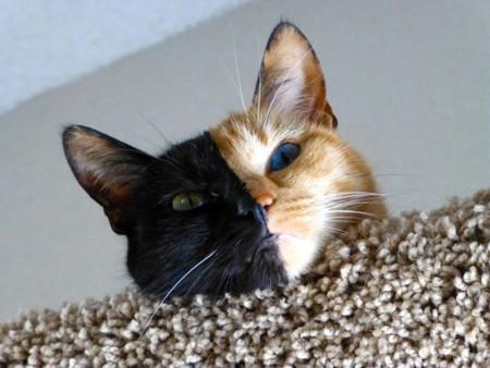 اروع قطط (2)